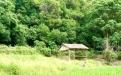 【试睡招募】离广州最近的世外桃源!你绝对想不到,这个原生态的森林秘境就在广州市内!