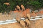 大象来了!昆明部署应急准备