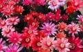 最适合懒人养的5种花,省心又好养,偶尔浇浇水就能活,你家养了吗?