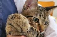 一起来举报猫同事!它在骚扰员工上班,员工还一脸幸福的样子!