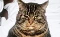 常来的流浪猫突然消失,小哥守数夜后猫出现,立马收养!