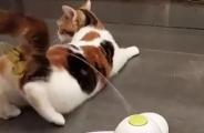 铲屎官买了自动逗猫玩具,结果被猫开发出新用途,直接裂开。。。